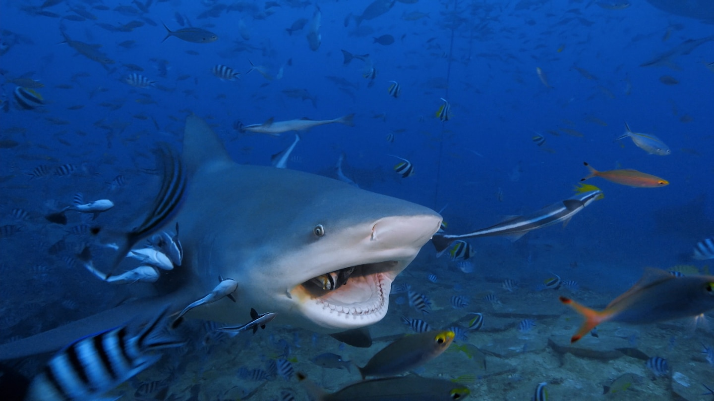 What to watch this weekend: 'Raging Bull Shark' on National Geographic