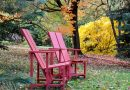 Tips on Fall Garden Cleanup