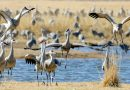Trump Administration, in Parting Gift to Industry, Reverses Bird Protections