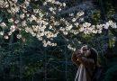 Cherry blossom season kicks off around the globe