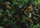 Colombia Seeks Justice for War Atrocities Via New Court