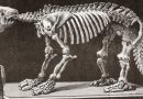 Decolonizing the Hunt for Dinosaurs and Other Fossils