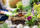 Flowers and vegetables to plant in spring