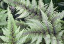 If You Think You Know What a Fern Is, Think Again