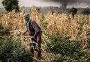 Intruder Pests May Drain Trillions From Africa's Economies, Study Finds