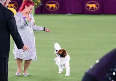 Westminster Dog Show 2021 Live Updates: German Short-Haired Pointer Wins Sporting Group